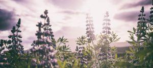 Démarche scientifique sur l'efficacité des Fleurs de Bach